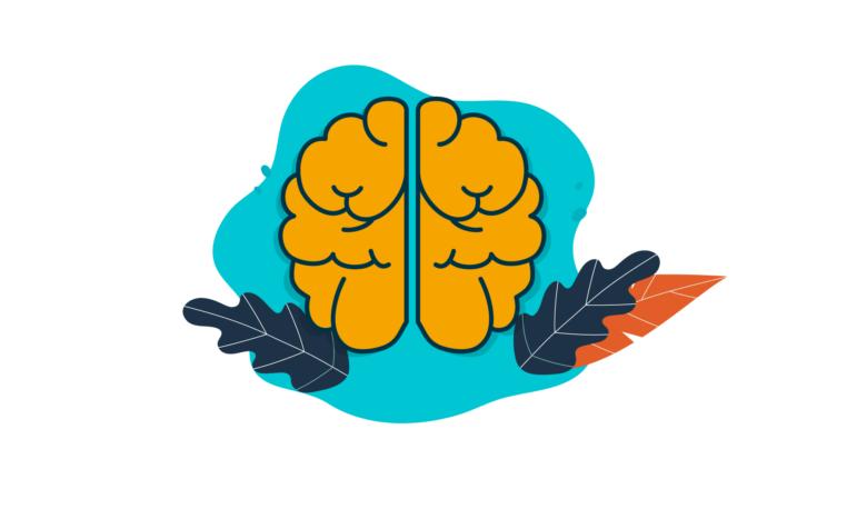 ¿Cómo aprendemos? La Neurodidáctica: una mirada al cerebro